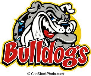bulldogge, reizend, grinsen, gesicht