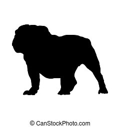 bulldogge, silhouette, hund, englisches