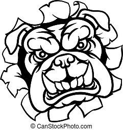 bulldogge, sport, maskottchen