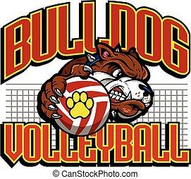 bulldogge, volleyball