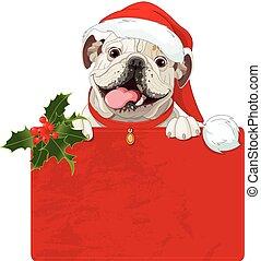 bulldogge, weihnachten, englisches