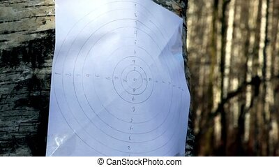 Bullet hit paper shooting aim on birch stem in park