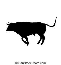 bullfi, direção, pretas, executando, touro