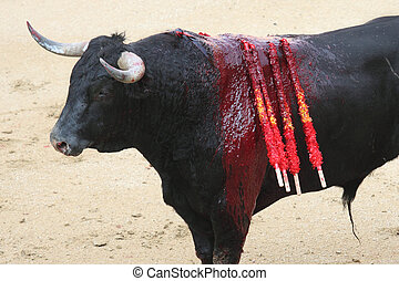 bullfight - a bull on a bullring in Madrid, Spain