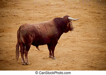 bullfight, en, arena, madrid, españa