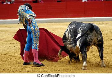 bullfight, españa, típico