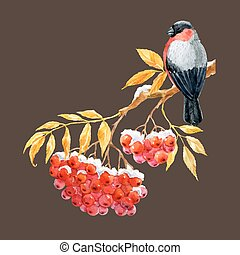 Bullfinch and ashberry - Beautiful image with nice bullfinch...
