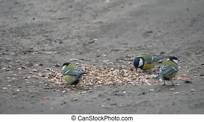 bullfinch and tit sitting on a branch and look at each other