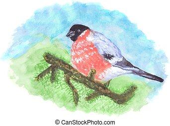 Bullfinch Bird On Pine Tree Branch  -  Watercolor Vector Illustration