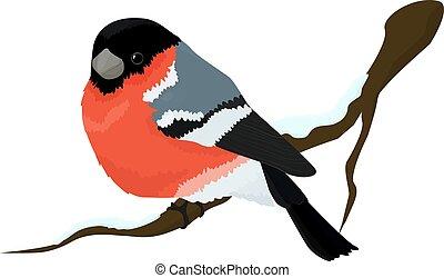 Bullfinch bird winter illustration - Bullfinch bird on ...
