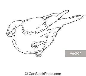 Bullfinch bird winter illustration - Bullfinch bird winter ...