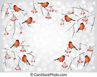 Bullfinch birds on branches winter background