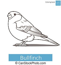 Bullfinch learn birds coloring book vector - Bullfinch learn...