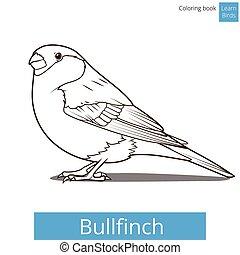Bullfinch learn birds coloring book vector - Bullfinch learn...