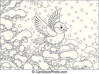 bullfinch, nevado, abeto
