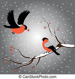 Bullfinch on rowan branch, snow, merry christmas, gray ...