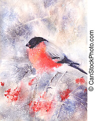 Bullfinch sitting on a branch - Water color drawing of a...