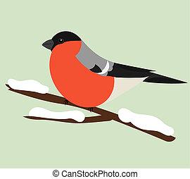 Bullfinch sitting on branch. Winter illustration
