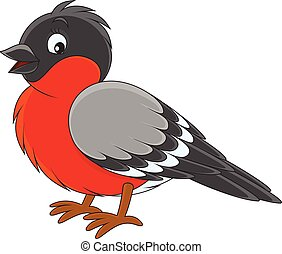 Bullfinch - Vector illustration of a bullfinch, on a white...