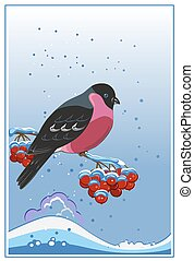 Bullfinch, winter greeting card