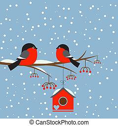 bullfinchs, coppia, rowan, birdhouse, ramo