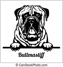 Bullmastiff - Peeking Dogs - breed face head isolated on white