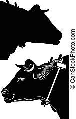 bullock., bull., negro, vaca, aislado, blanco, fondo., vector, ilustración