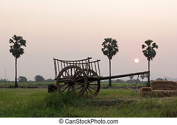 bullock cart in field with sunrise background