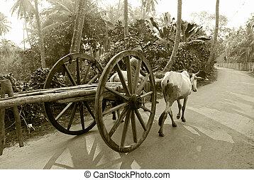 bullock cart ride - A bullock cart moving on the road