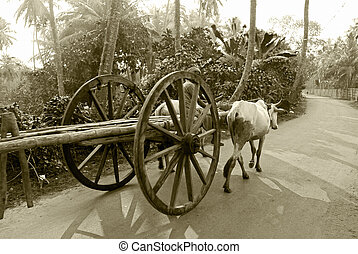 bullock cart ride - A bullock cart moving on the road