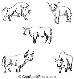 Bulls. Sketch pencil. Drawing by hand. Vector