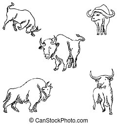 Bulls. Sketch pencil. Drawing by hand Vector
