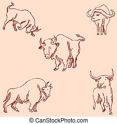 Bulls. Sketch pencil. Drawing by hand. Vintage colors Vector
