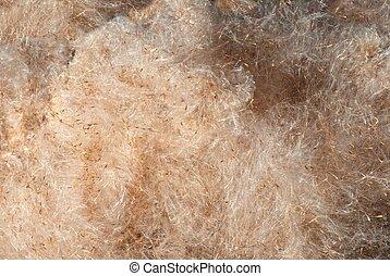 bulrush fluff texture
