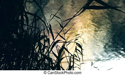 Bulrush Near The Lake - Mirrored lakes surface and bulrush...