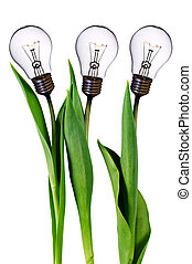 bulwa, lampa, tulipany