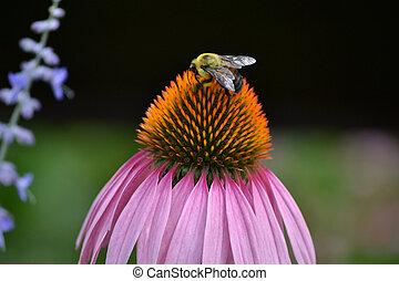 Bumble Bee 2