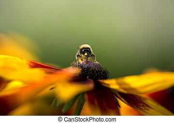 Bumble bee collecting pollen from flower