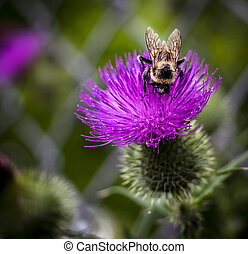 Bumble bee on the flower
