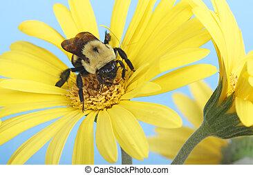 bumble, fleur, abeille