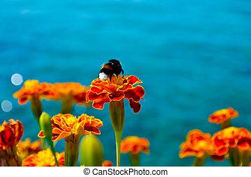 bumble, souci, abeille