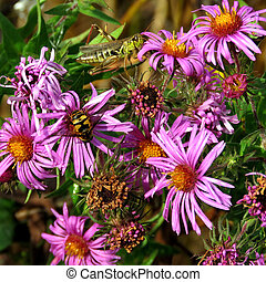Bumblebee and grasshopper on flowers
