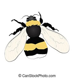 Bumblebee color illustration isolated on white background.