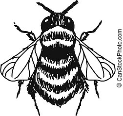 bumblebee - hand drawn, doodle, sketch illustration of...