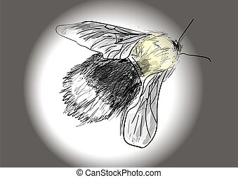 bumblebee on a white background