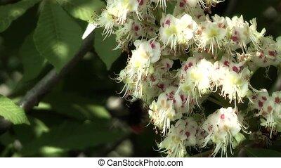 Bumblebee,