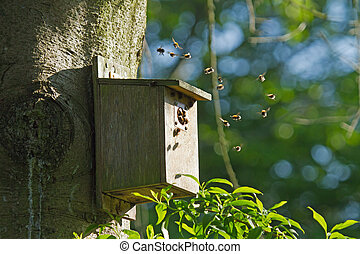Bumblebees in Bird Nest Box - Bumblebees flying around and...