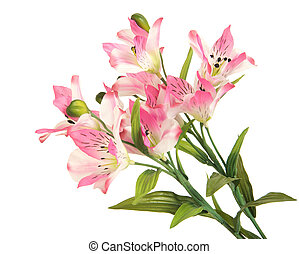 bunch branch flowering-plant with pink flower - bunch ...