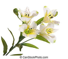 bunch branch flowering-plant with white flower - bunch ...