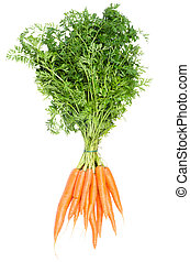 bunch carrots isolates before white background